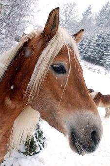 Free Horse Royalty Free Stock Image - 13878176