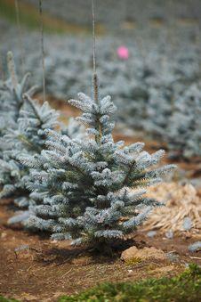 Free Tree Farming & Field. Stock Photos - 13879183