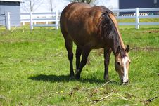 Free Horse In A Field. Royalty Free Stock Photos - 13879268