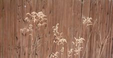 Free Grass Along Fence Stock Photography - 13879282