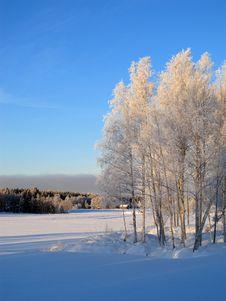 Free Winter Royalty Free Stock Photos - 13879418