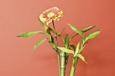 Free A Flower With Orange Background Stock Image - 13879431