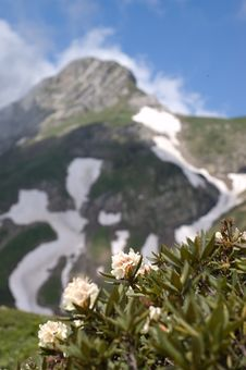 Mountain Flowers Postcard Royalty Free Stock Photo
