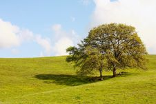 Two Trees On The Hill Royalty Free Stock Photo
