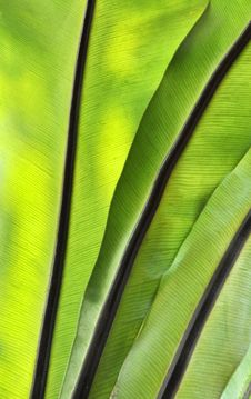 Free Green-yellow Leaf Royalty Free Stock Photography - 13879837