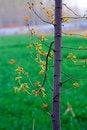 Free Spring Stock Image - 13889391