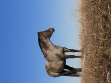 Free Horse Looking Off Into The Distance Royalty Free Stock Photography - 13881427