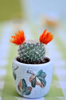 Free Close Up Of A Cactus With Flowers Royalty Free Stock Image - 13881696