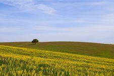 Free Summer Landscape Royalty Free Stock Image - 13882066
