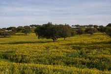Free Summer Landscape Stock Image - 13882281