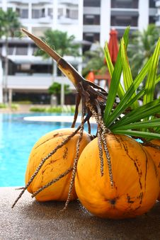 Free Coconuts At A Hotel Poolside Stock Images - 13882704