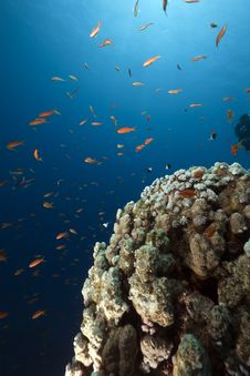 Free Ocean, Coral And Fish Stock Photo - 13882750