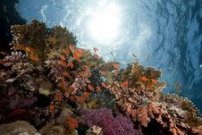 Free Ocean, Coral And Fish Royalty Free Stock Photography - 13882867