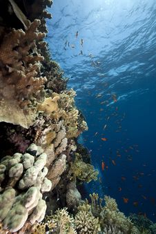 Free Ocean, Coral And Fish Royalty Free Stock Photo - 13882875