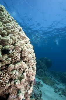 Free Ocean, Coral And Fish Stock Photo - 13882880