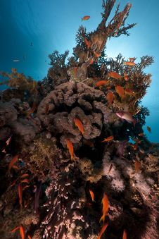 Ocean, Coral And Fish Stock Photography