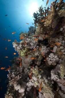 Free Ocean, Coral And Fish Royalty Free Stock Photo - 13883065