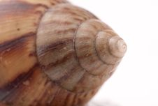 Free Snail Macro Stock Photography - 13883552