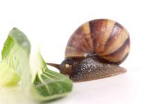Free Snail Macro Stock Image - 13883571