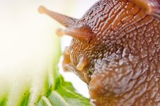Free Snail Macro Stock Photo - 13883600