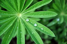Free Water Drops Stock Photo - 13883870