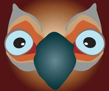 Free Big-eyed Bird Stock Photo - 13884030