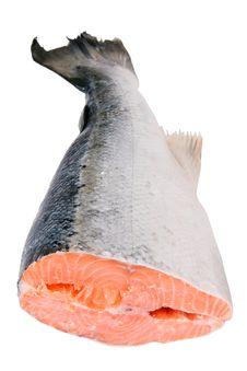 Free Fresh Salmon Royalty Free Stock Photo - 13884075