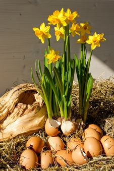 Free Eggs And Daffodils Easter Display Royalty Free Stock Image - 13885096