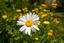 Free Springtime - Flowers Stock Image - 13885991