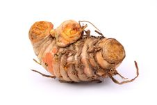Free Ginger Stock Photography - 13886882