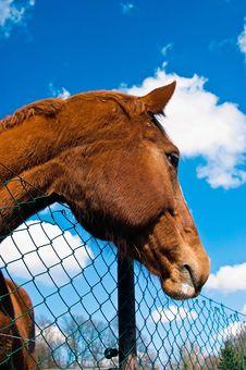 Free Brown Horse Royalty Free Stock Photos - 13886888