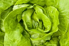 Free Lettuce  Planting Royalty Free Stock Photography - 13887187