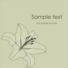 Free Vector Background With Flower Lily Stock Photography - 13887912