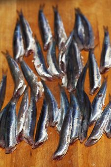 Free Anchovies Royalty Free Stock Images - 13888109