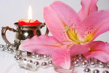 Free Pink Lily Royalty Free Stock Photography - 13889557