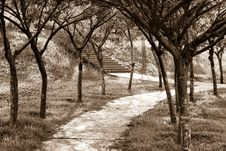 Walkway Covered By Trees Royalty Free Stock Image