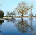 Free Tree Reflection In Water Royalty Free Stock Photo - 13890135
