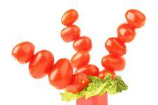 Free Tomatoes Tree Royalty Free Stock Image - 13890006