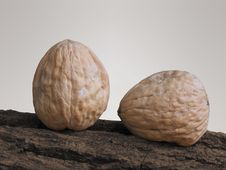 Free 2 Walnuts On A Tree Stock Photos - 13890343