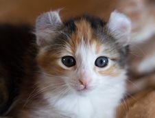 Free Kitten Stock Photo - 13891720