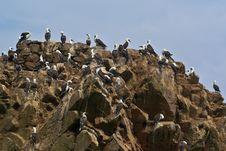 Free Ballestas Islands. Royalty Free Stock Images - 13891799