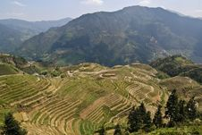 Free Flooded Rice Terraces Stock Photography - 13891942