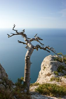 Free Dead Tree On Sea Coast Royalty Free Stock Photos - 13892058