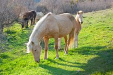 Free Mare And Foal Grazing Stock Photo - 13893430