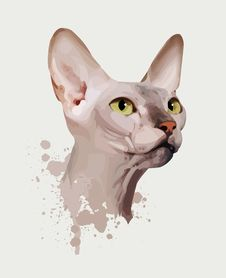 Free Portrait Of A Cat On An White Background Stock Photo - 13893880
