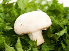 Free Mushroom Stock Image - 13893901