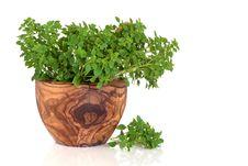 Free Basil Herb Royalty Free Stock Photos - 13894208