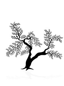 Free Tree Silhouette Stock Images - 13894444