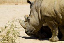Free White Rhino Royalty Free Stock Photos - 13895468