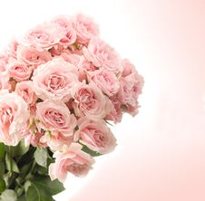 Free Pink Roses Stock Images - 13895534